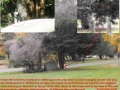 SPIRIT PHOTOGRAPHY AT CEDAR HILL CEMETERY SHOWS 2 DIFFERENT PHOTOGRAPHERS ON DIFF DAYS AND DIFF RESULTS