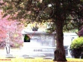 SPIRIT IMAGE OF STRANGE HEAD SHOWN ON A TREE AT THE CEMETERY ALSO WITHIN THE CIRCLE I SEE A POSSIBLE REPTILE LOOKING SORT OF FACE UPON CLOSER INSPECTION