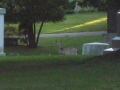 CURLY HAIRED SPIRIT BOY IN FRONT OF DEER AT CEDAR HILL CEMETERY