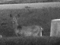 BLACK AND WHITE ASPECT OF SPIRIT BOY'S HEAD IN FRONT OF DEER